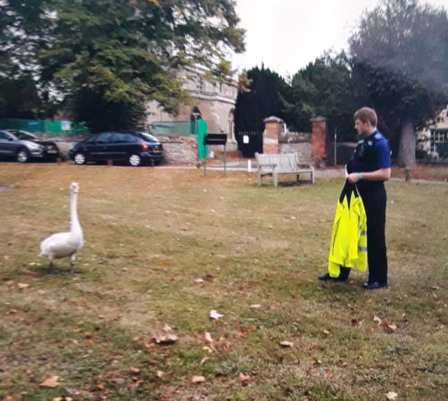 PCSO Lewis Quarterman takes off his jacket to herd the swan. Picture: Thames Valley Police South Oxfordshire and Vale.