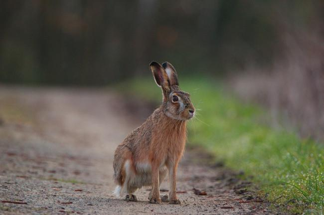 A man will appear in court in connection with illegal hare coursing.