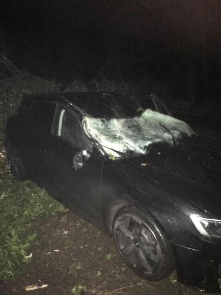 Father 'knocked out' as falling tree hits car during Storm Ciara