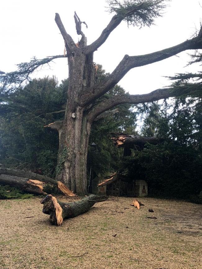 Storm Dennis tears down old church tree
