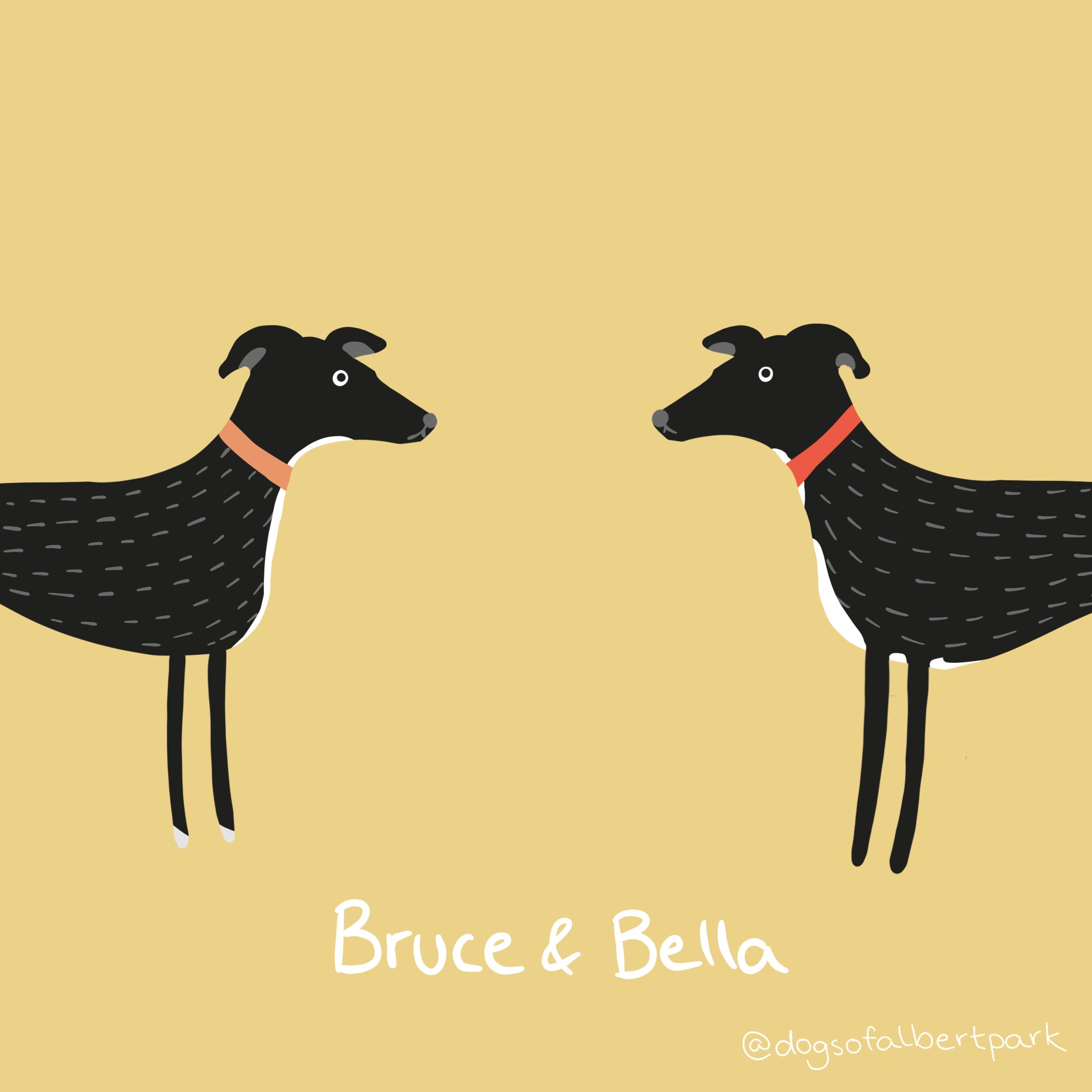 Greyhounds Bruce and Bella