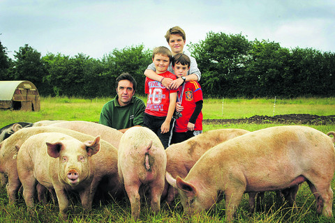 Pig farmers count cost of rising feed bills and bad weather