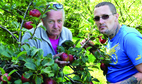 Weather takes a bite out of apple harvest
