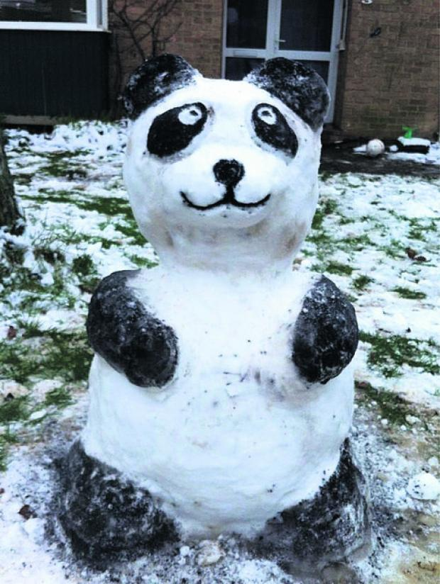 Herald Series: Our winner the Snow Panda by Jade Laforest