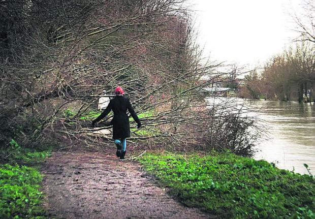 Herald Series: A fallen tree blocks the tow path of the Thames below Osney Lock towards Oxford yesterday following wet and stormy weather over the weekend