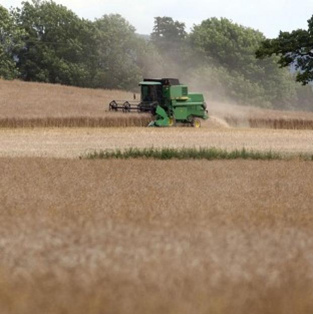 Herald Series: A report shows UK agriculture's contribution to the economy increased by 54% between 2007 and 2012