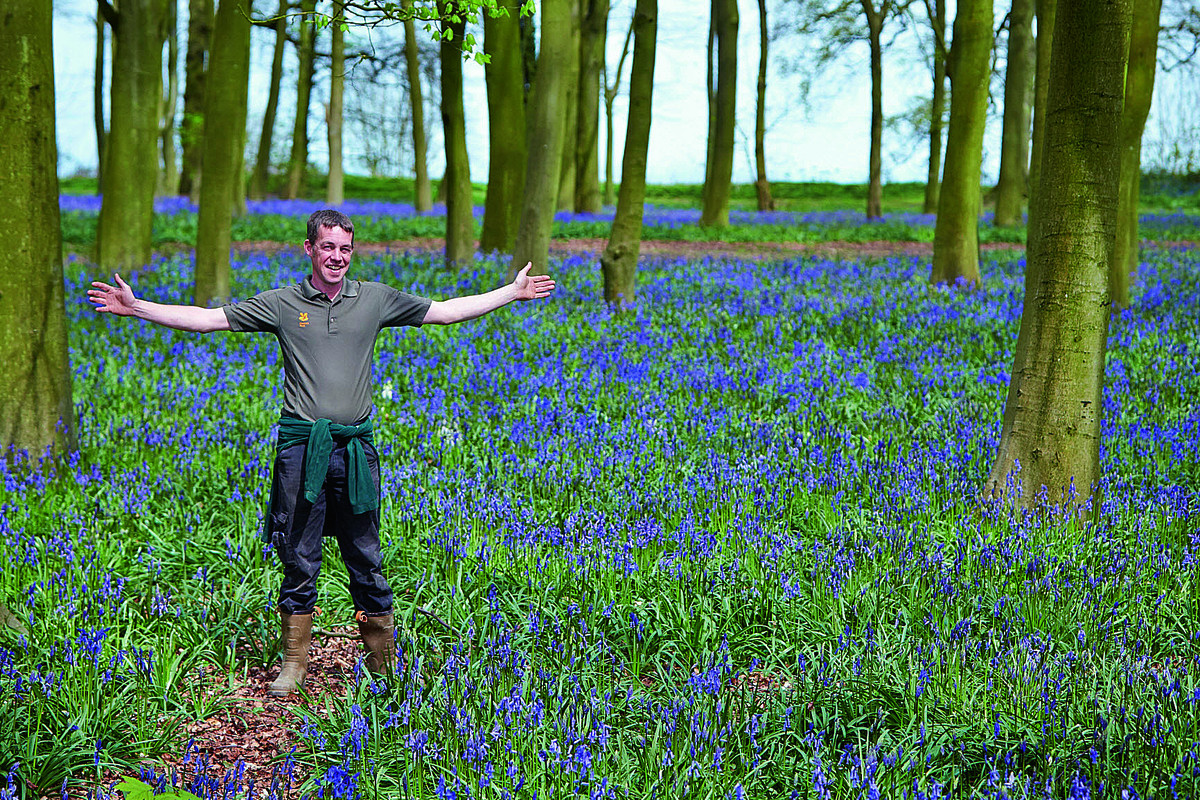Andy Foley, National Trust ranger at Badbury Clump near Faringdon, pictured among the bluebells. Picture: OX66665 Cliff Hide