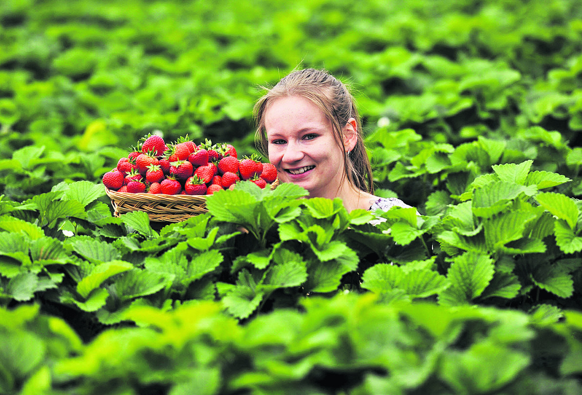 Events assistant Kirsty Ebsworth, enjoys this year's crop. Picture: Mark Hemsworth