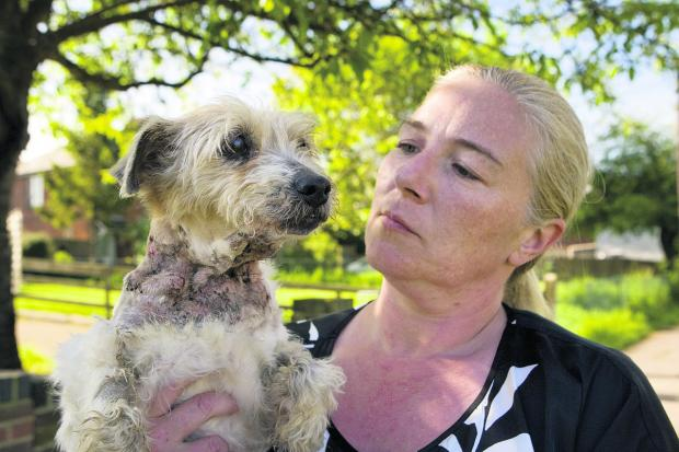 Trisha Fitzsimmons with her terrier Megan
