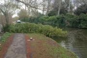 A tree down on the towpath in Oxford