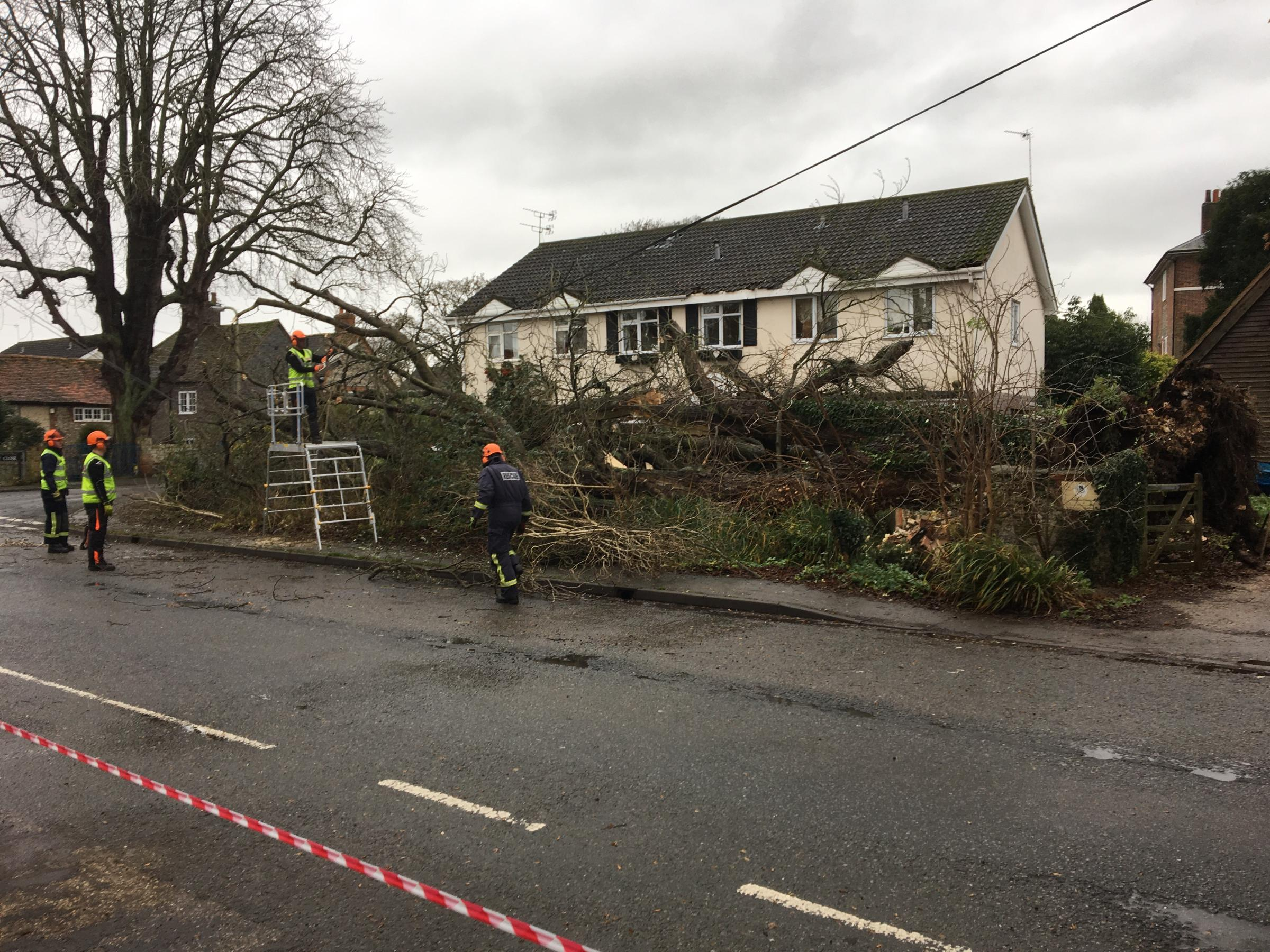 Tree falls across three gardens bringing down telephone wires