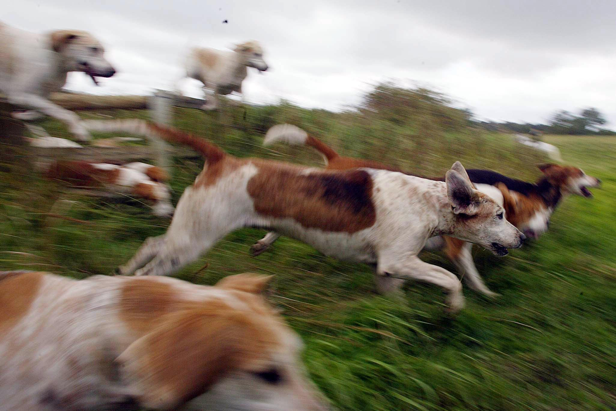 Fox hunting. Pic: Owen Humphreys/PA Wire
