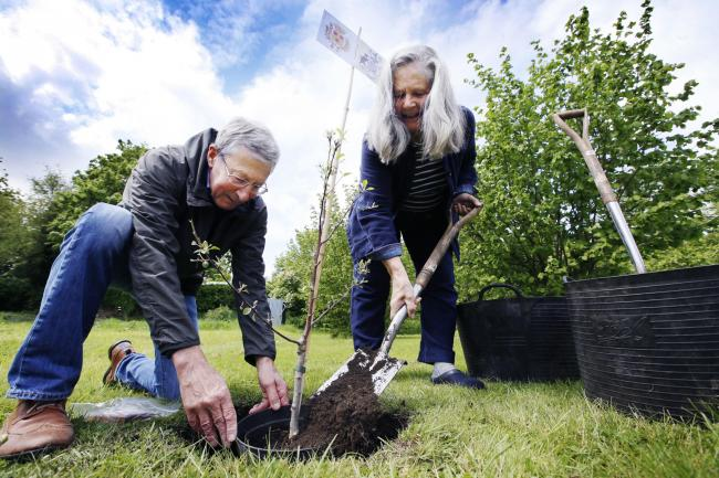 Tree Planting in Oxford in May.Picture by Ed Nix.